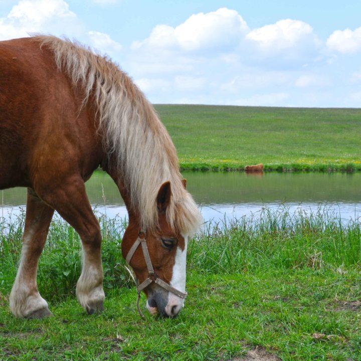 konie-dwor-debogora